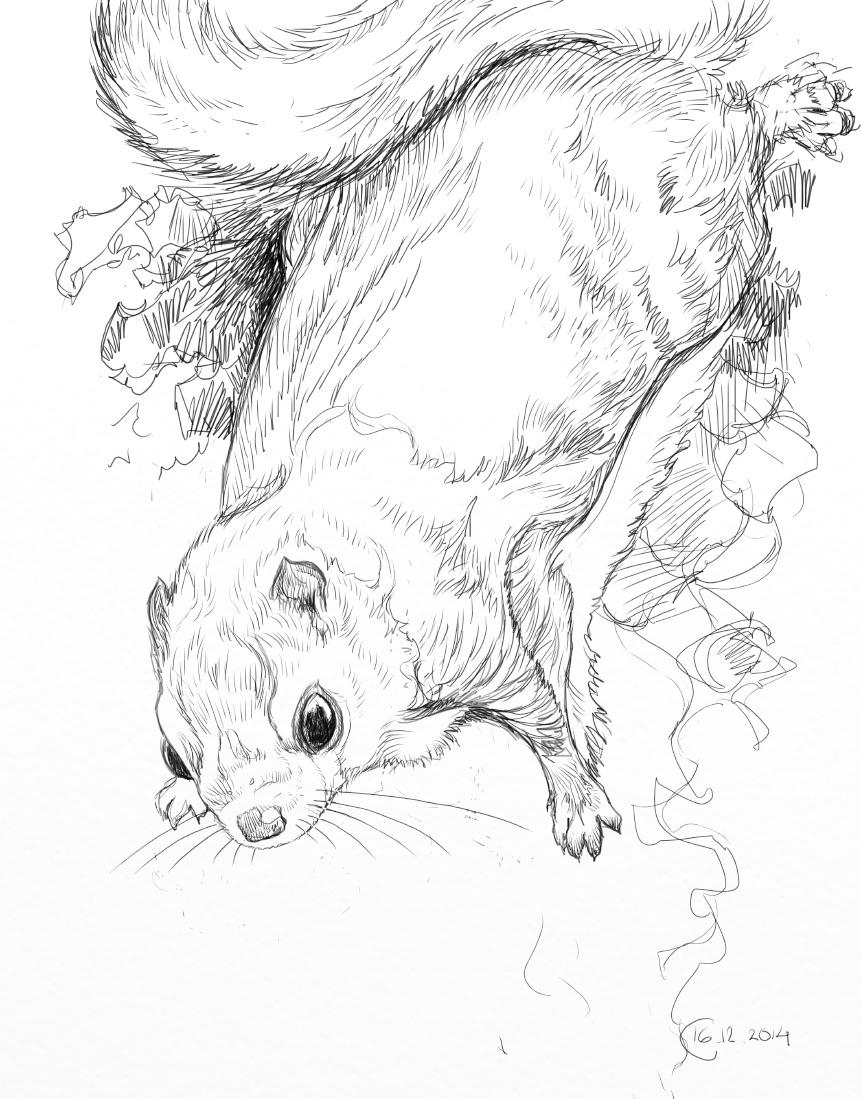 flying squirrel sketch tombjorklund fi